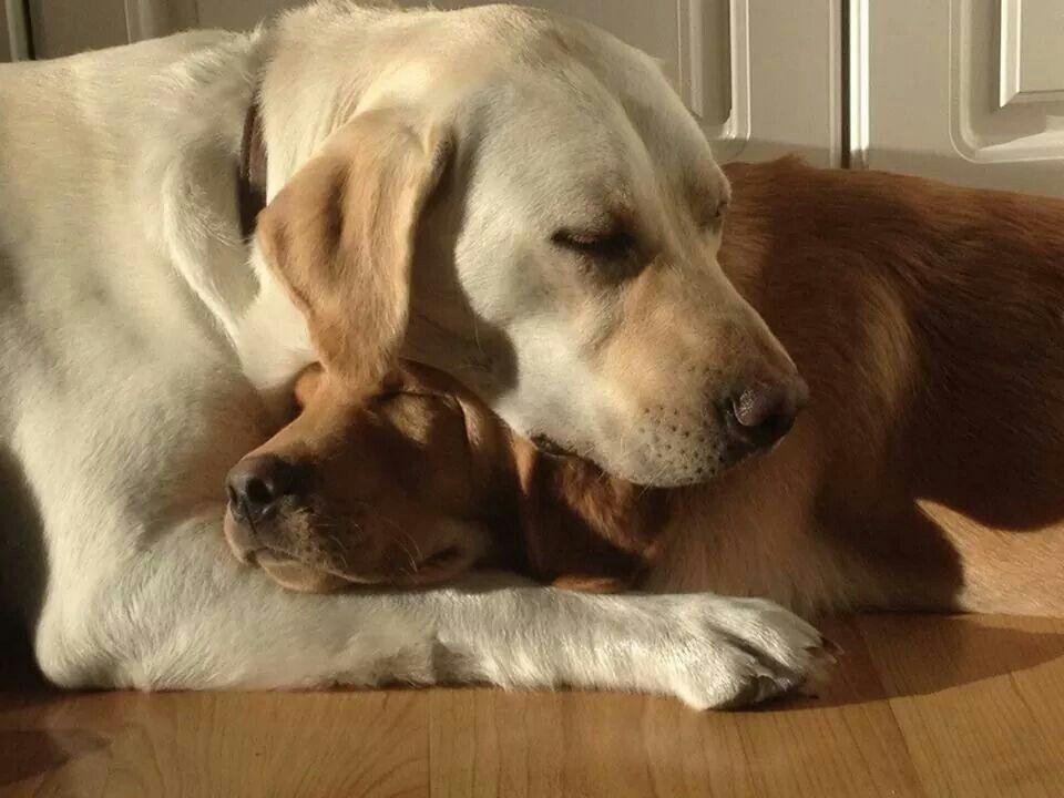 Beatitudine canina nel dormire abbracciati. ♥ #bestfriends #miglioriamici #cani