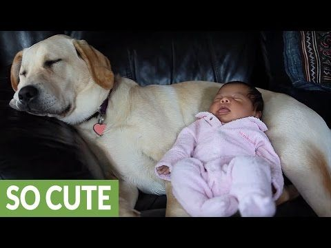 Labrador Bambini ~ In questo video vedrete una compilation che ha come protagonisti