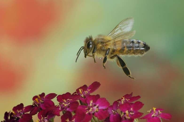 Although no proper explanation is available for this, many believe that bees are more likely to sting redheads.
