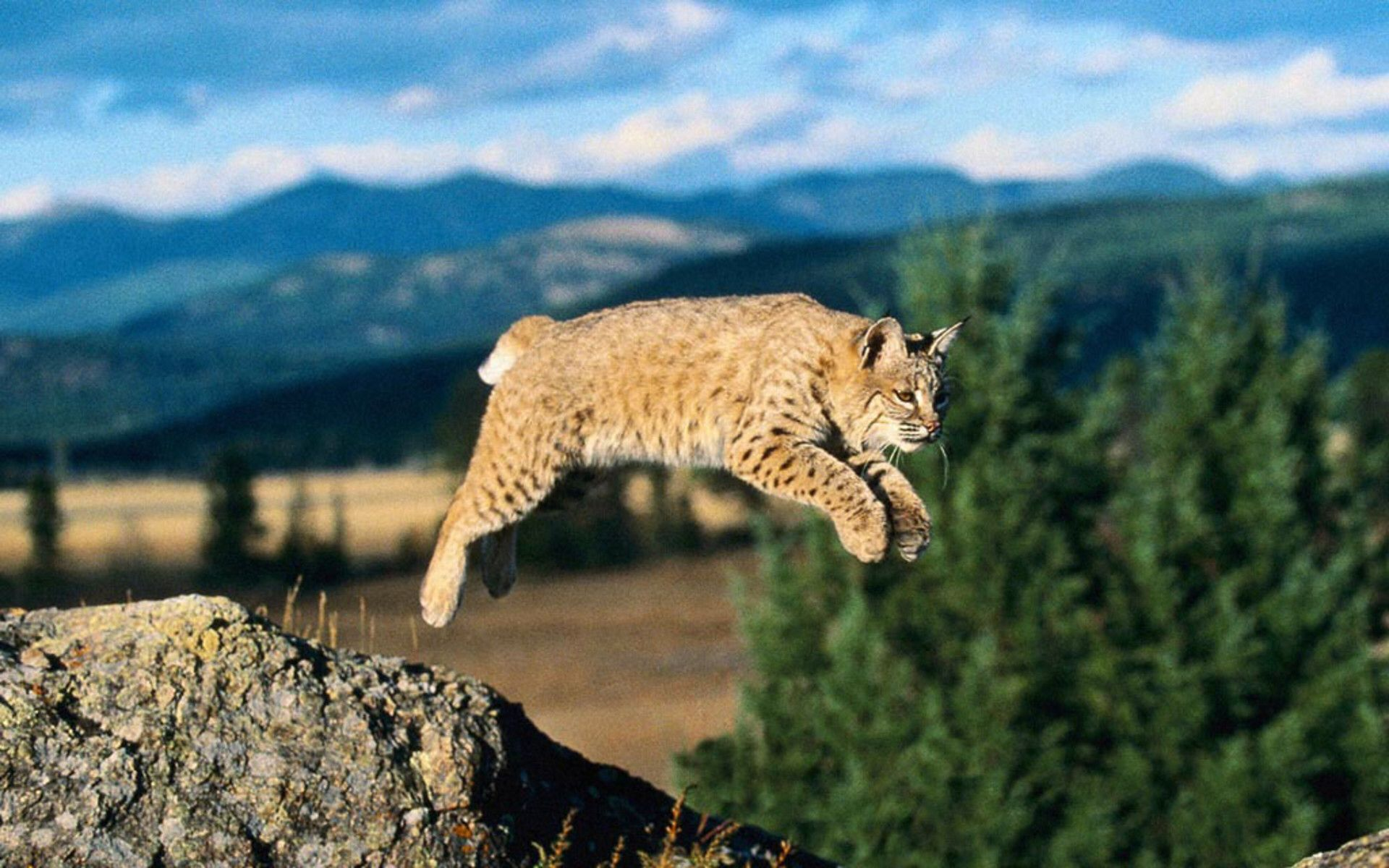 Pin by Sara Parker on Large felines Wild animals photos
