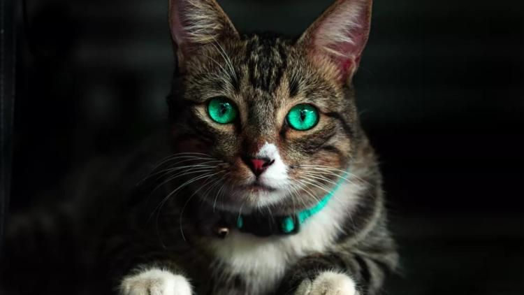 Why Your Cat Gags And What To Do About It Cat Whisperer Cat Expressions Cats