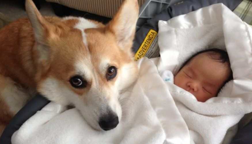 Proof that kids and dogs make the most amazing BFFs (25 Photos)