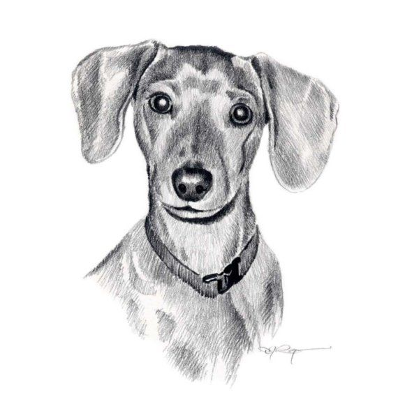 Miniature Dachshund Dog Pencil Drawing Art Print By Artist Dj