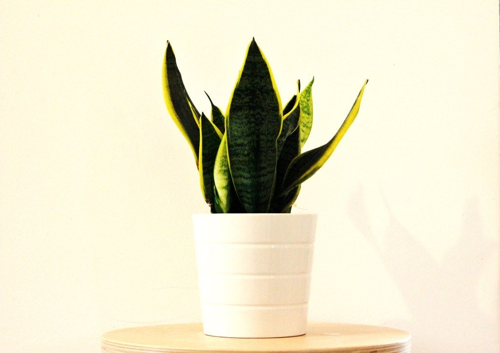Poisonous Interior Plants for Dogs & Cats Large indoor