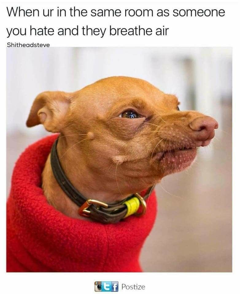 Pin by Spazzy on Quick Saves Funny dog memes, Funny