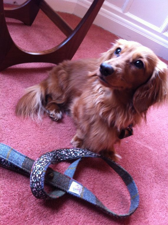 Great for any leftover Harris Tweed - Harris tweed dog leash (http://www.etsy.com/listing/122229970/harris-tweed-dog-leash-lead-made-in)