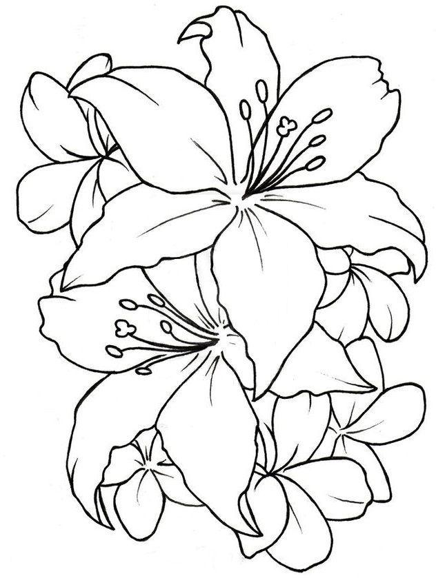 Pin von Anna Borowczyk auf Szkic | Pinterest | Zeichnungen und Bilder