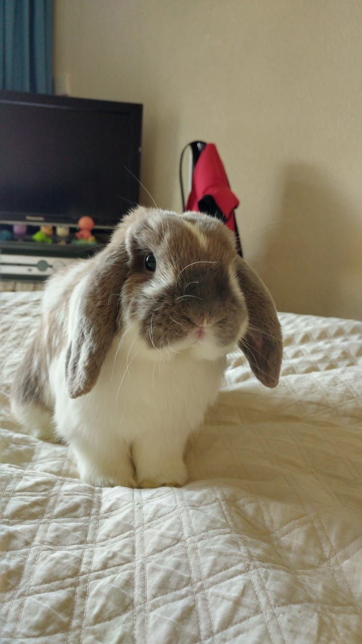 Show Your Rabbit Some Love Buy These For Your Bunny We Discuss The Best Toys Treats Bottles Advice Care Tips Information Breeds Bor Rabbit Cute Bunny Pet Shop