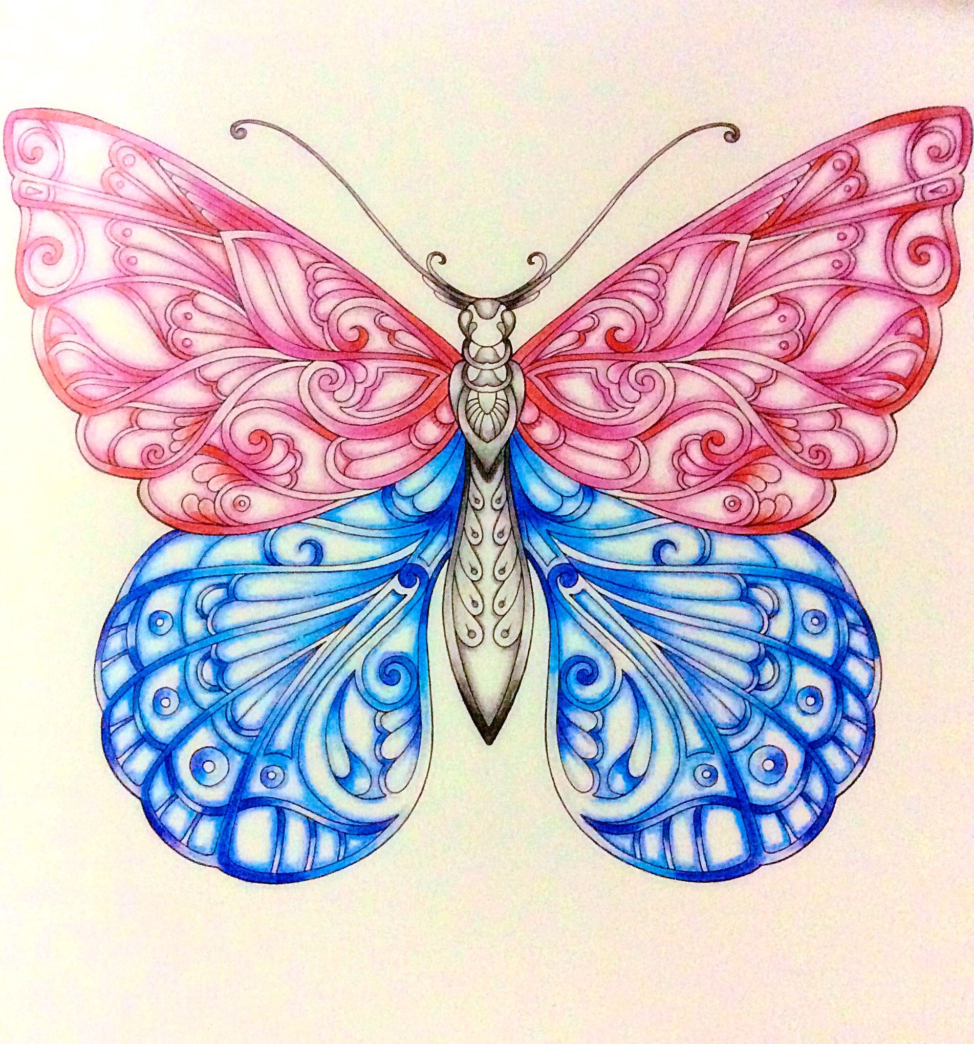Magical Jungle Butterfly Johanna Basford Johanna Basford Coloring Book Johanna Basford Coloring Basford Coloring