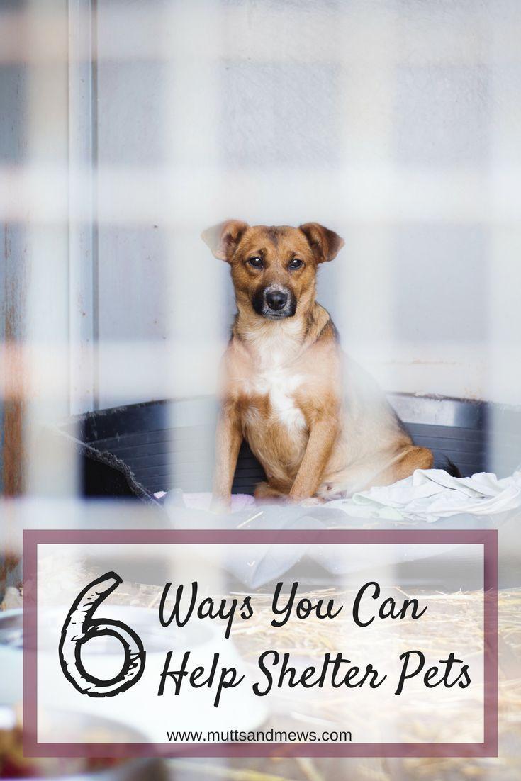 6 Ways You Can Help Shelter Pets Pets, Pet safe, Animal
