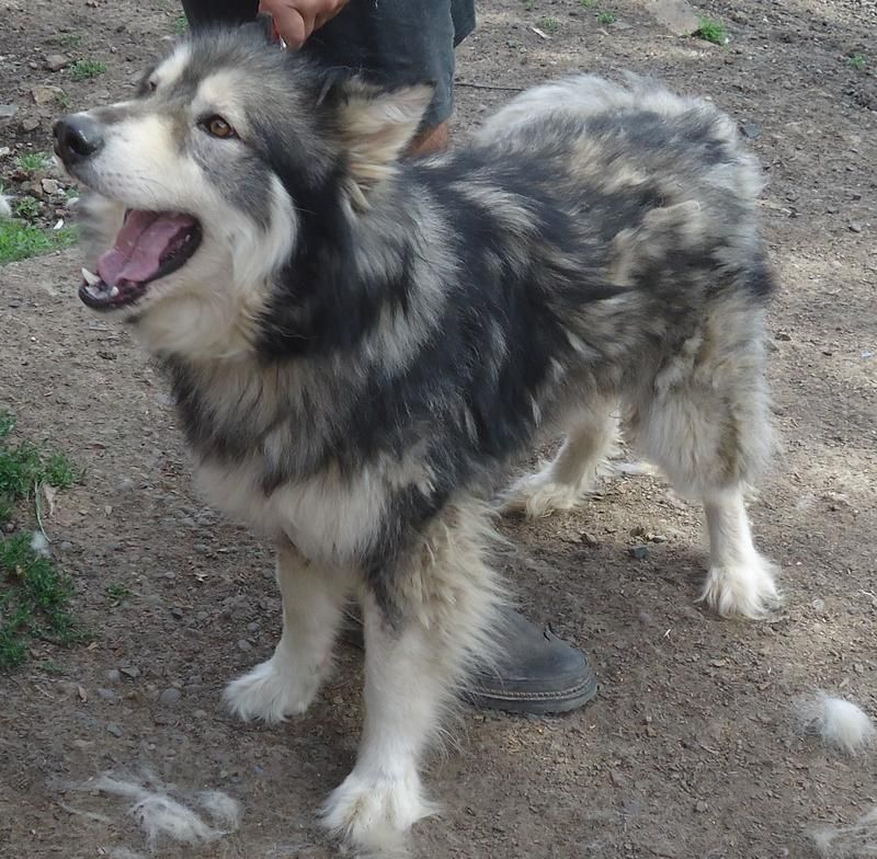 2 yr old livewire neutered male. If you love both