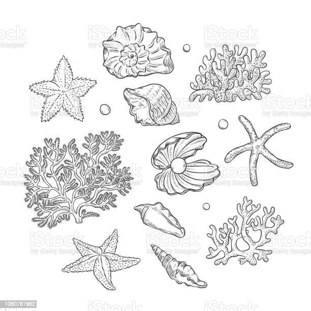 10 Vector set sea shells stars corals and pearls different shapes....