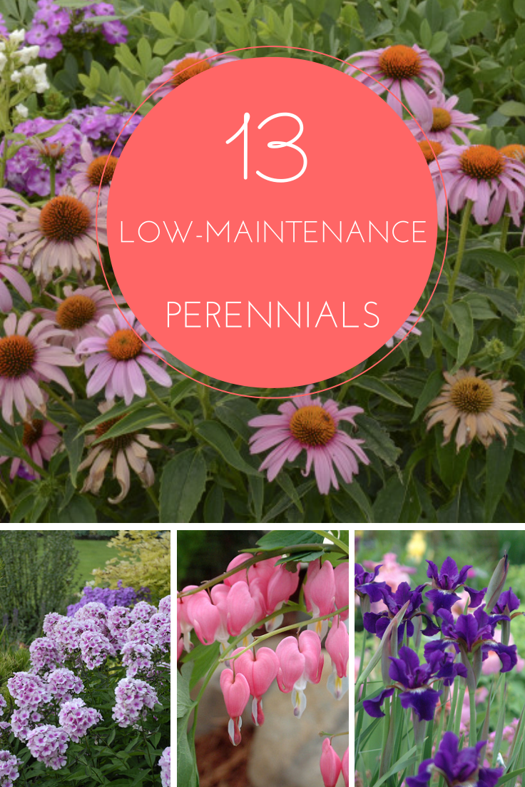 13 Low Maintenance Perennials For Any Garden Httpwww