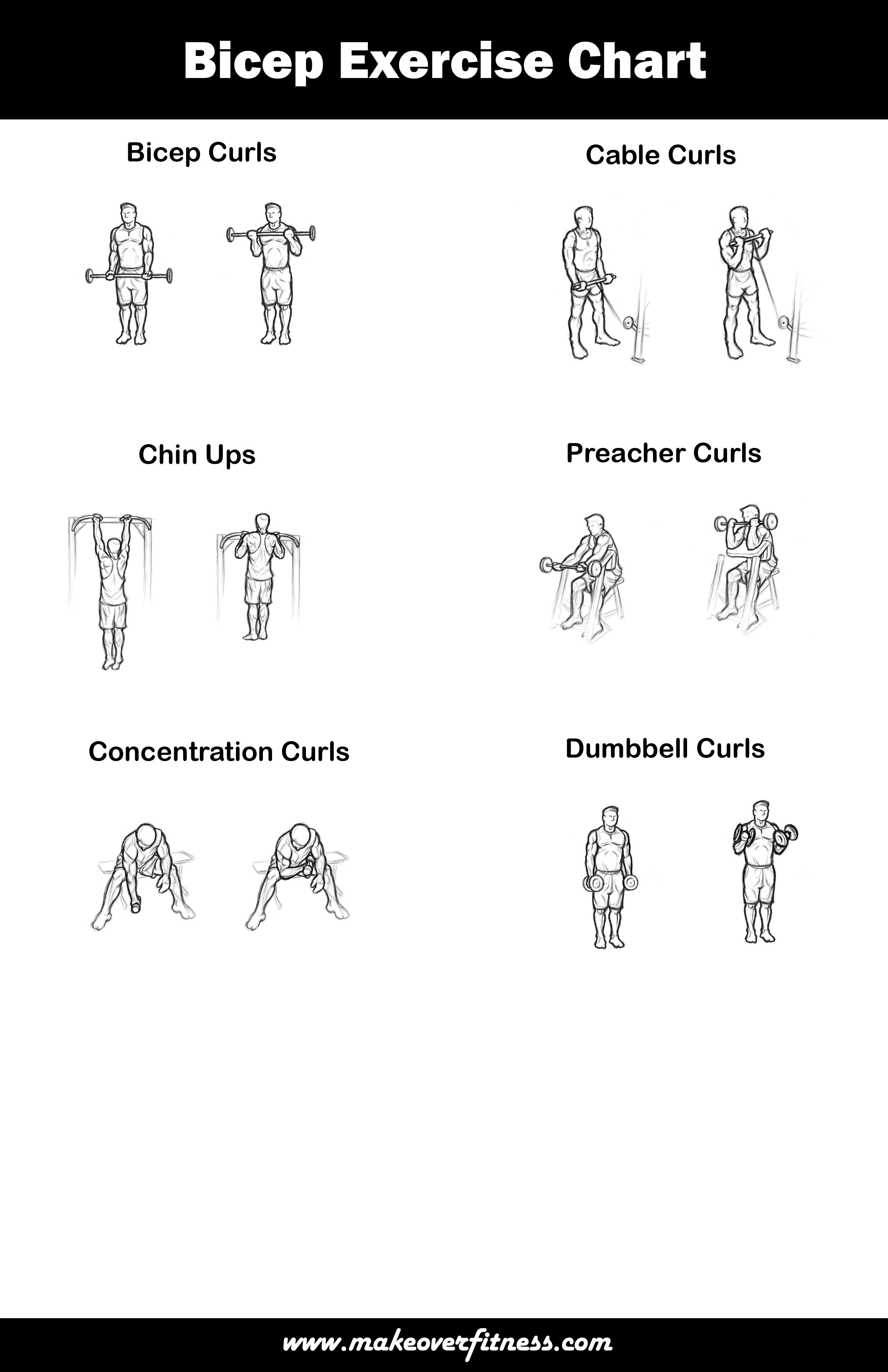Printable exercises charts for chest, arms and shoulders ...