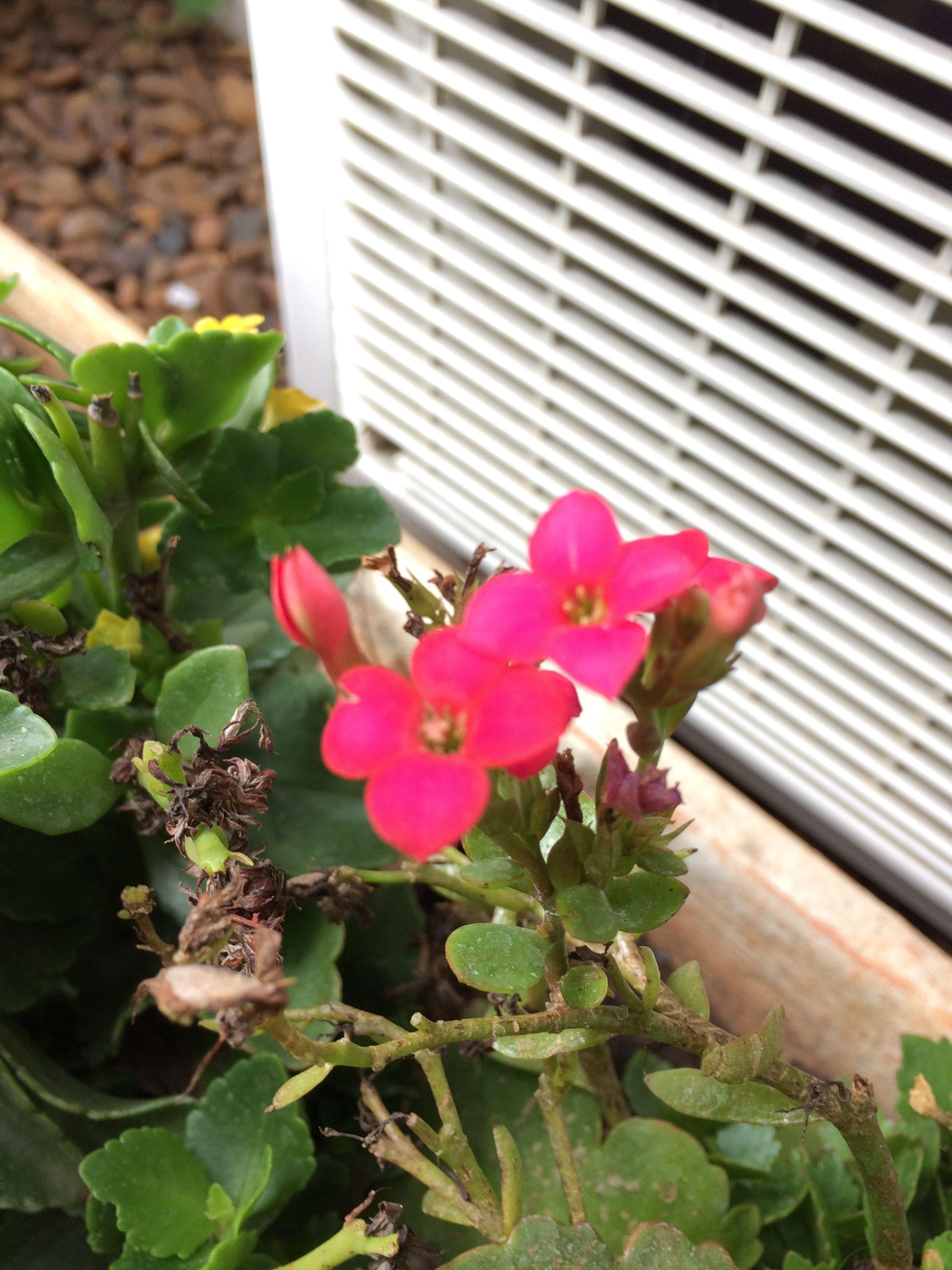 Pin by doris mardegan on flores pinterest