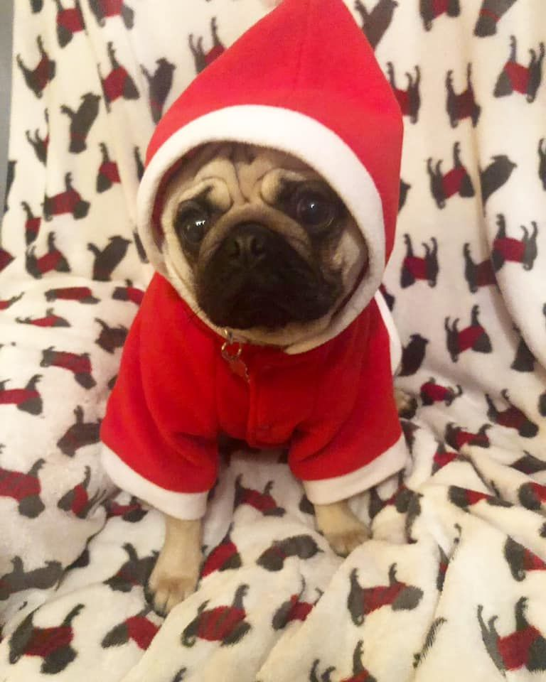 Urban Pup Fleece Santa Coat Available At Www Ilovepugs Co Uk Sizes