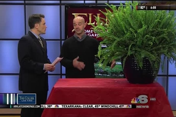 Tony Thornton With Ellis Home And Garden Stopped By NBC 6 News Today To  Share How