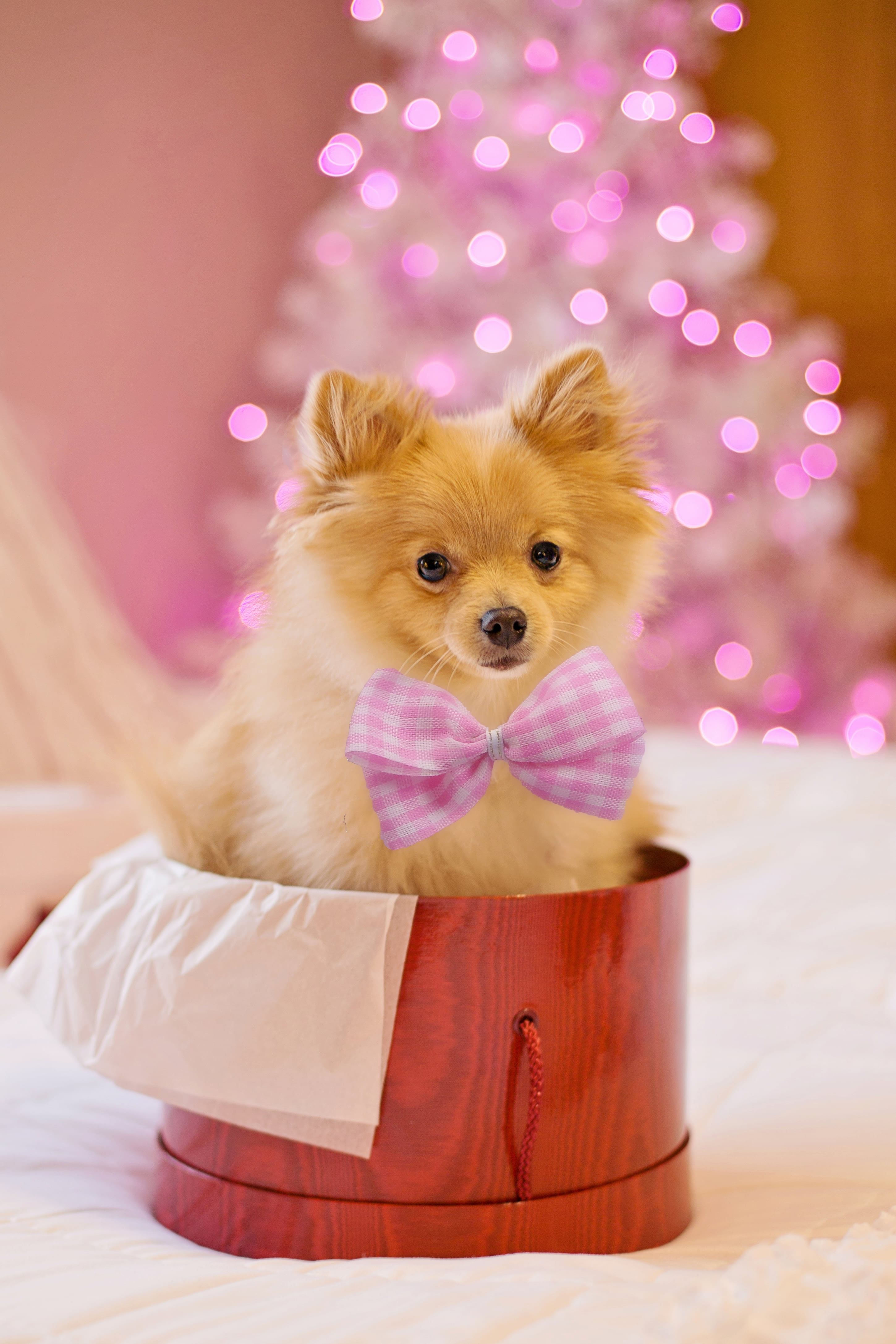 A Puppy Inside A Gift Box In 2020