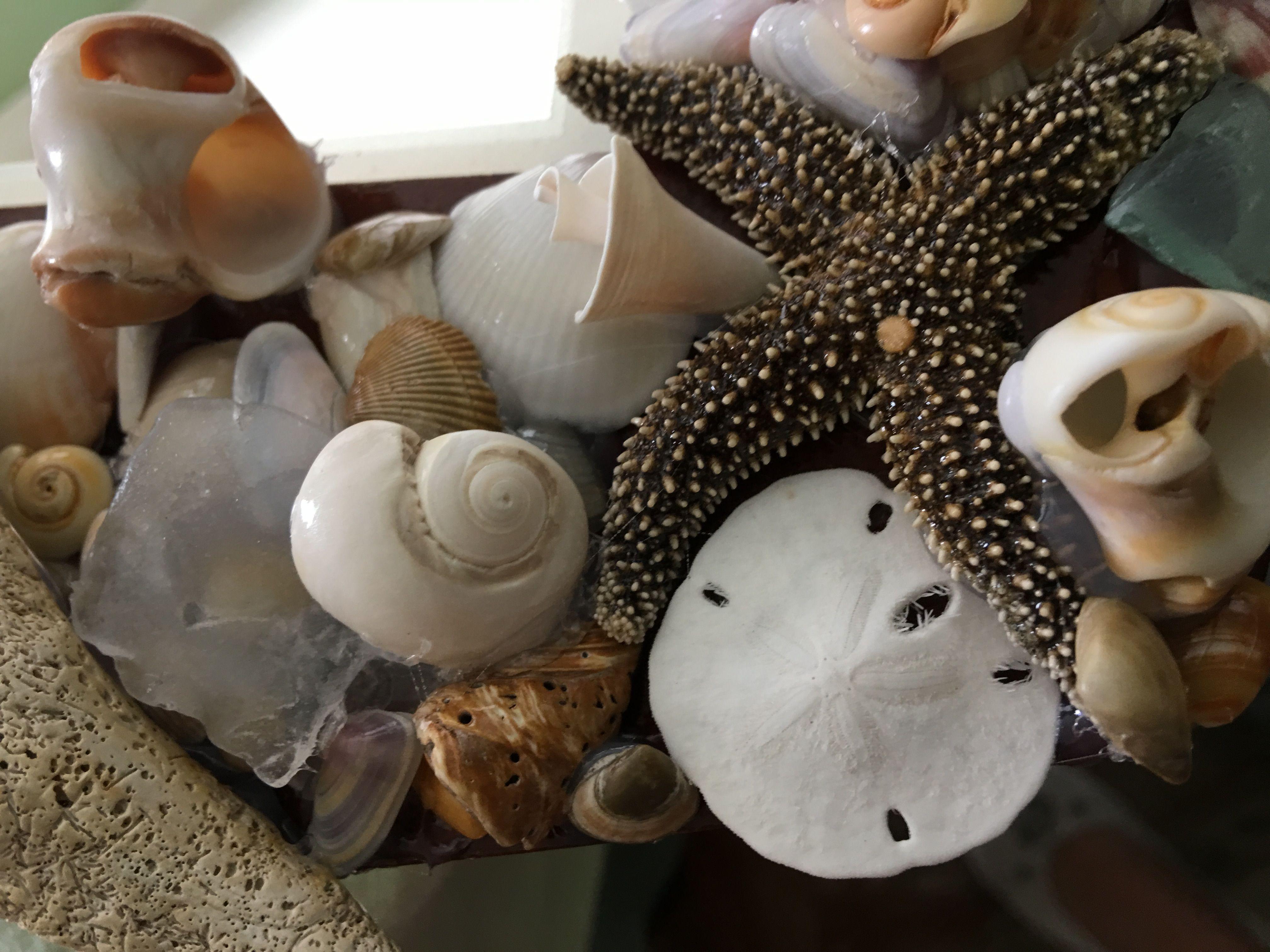 Pin by tamara wilhite on sea shell creations by tamara
