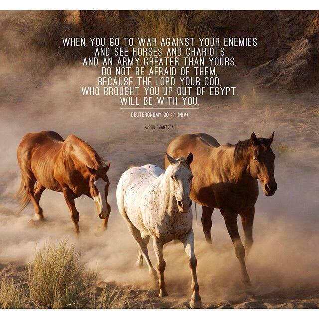 Deuteronomy 20 1 Horse Wallpaper Horses Images, Photos, Reviews