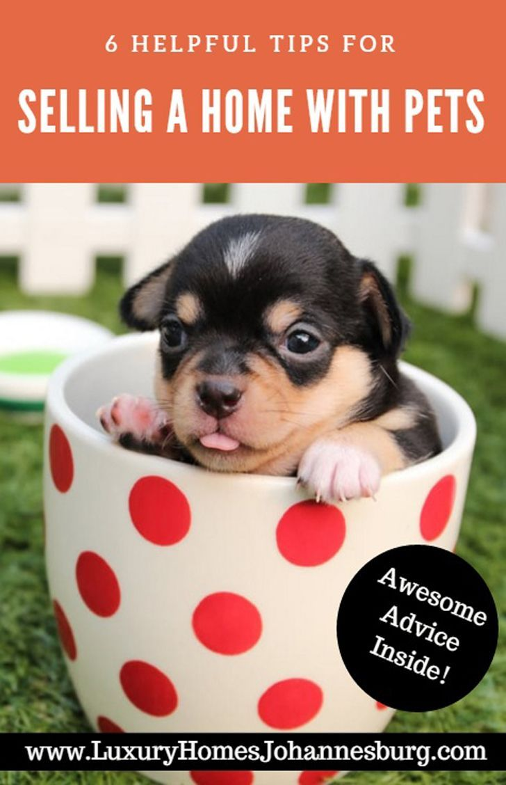 6 Helpful Tips For Selling A Home With Pets Cute Puppies Pets