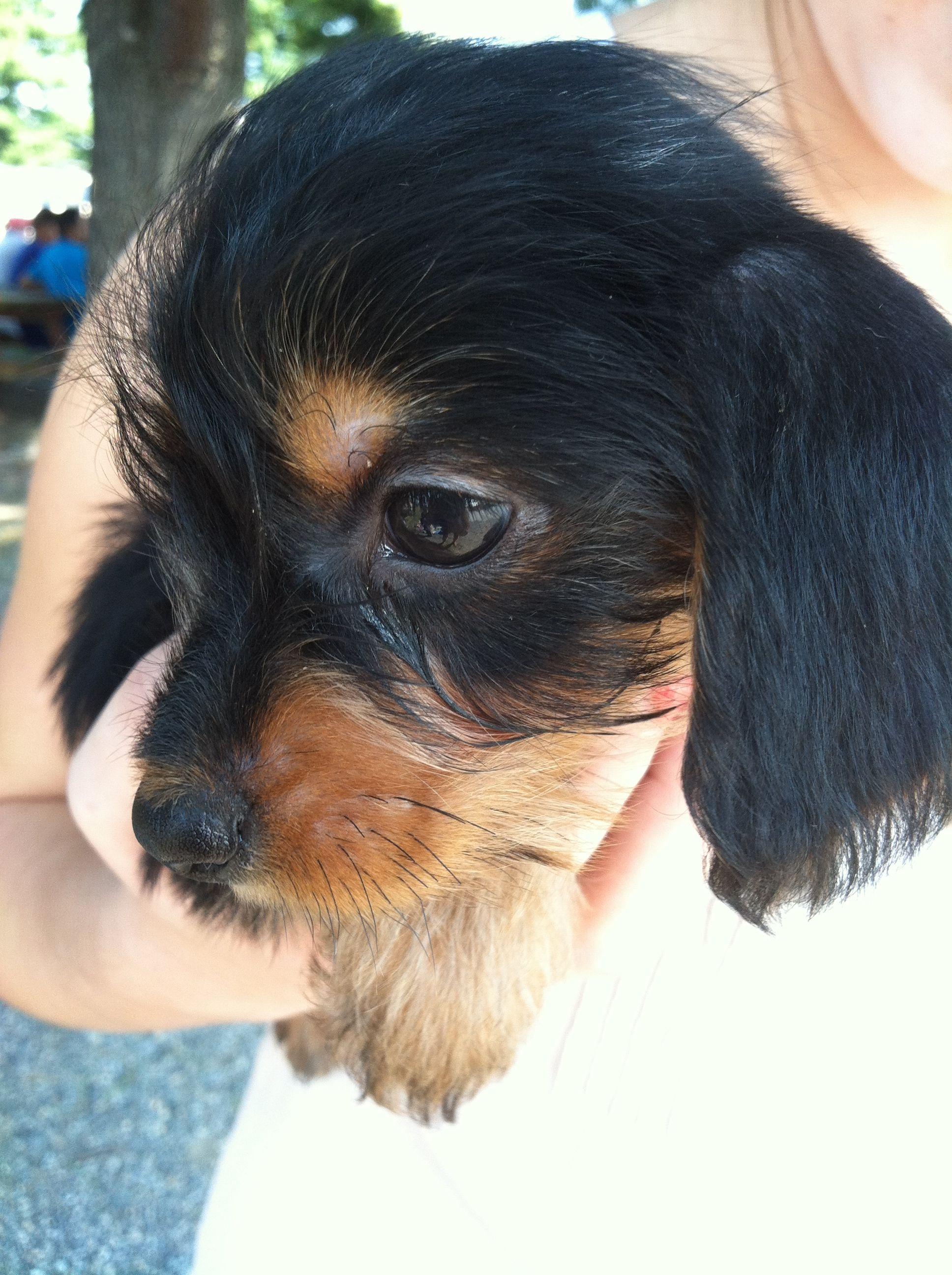 Craigslist Portland Pets