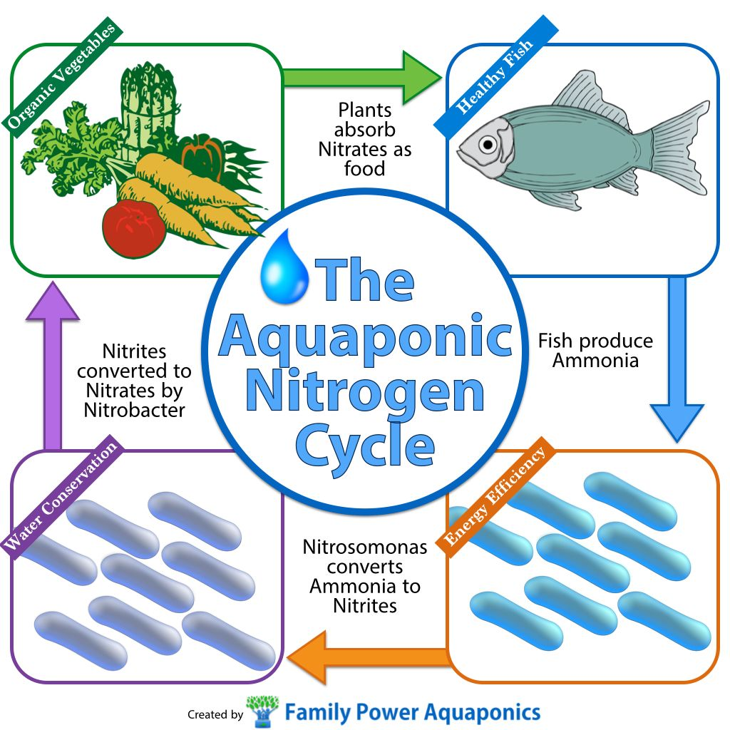 The Aquaponic Nitrogen Cycle Family Power Aquaponics Nitrogen Cycle Aquaponics Organic Vegetables