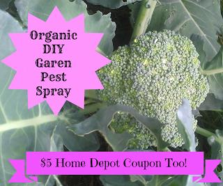 Organic DIY garden pest spray! Easy recipe and a 5 Home