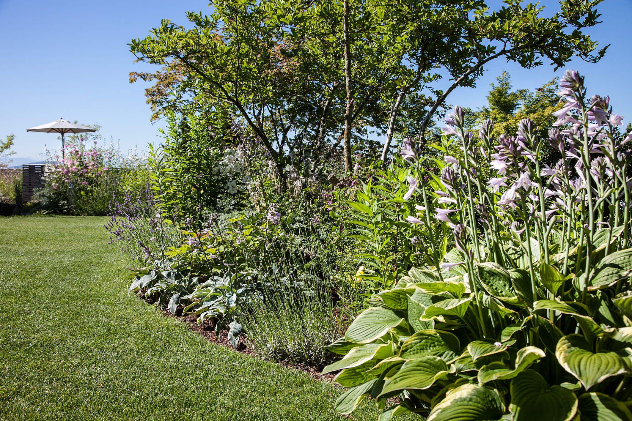 Hosta Funkie Grosszugige Gartenanlage Mit Schwimmteich Gartengestaltung Gartengestaltung Schwimmteich Gartenanlage