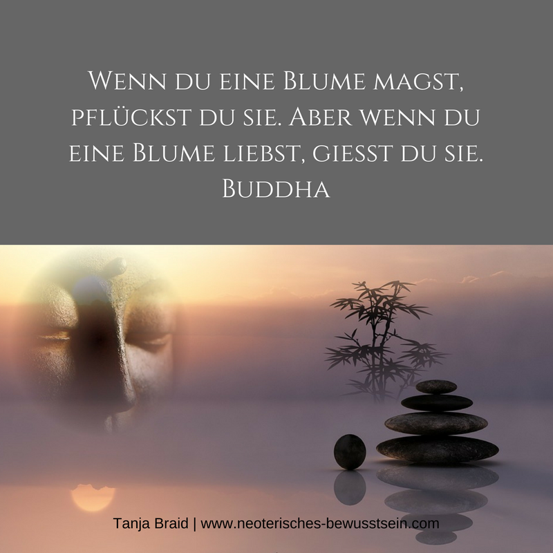 Spruch Zitat Buddha Spirituelle Zitate Spruche