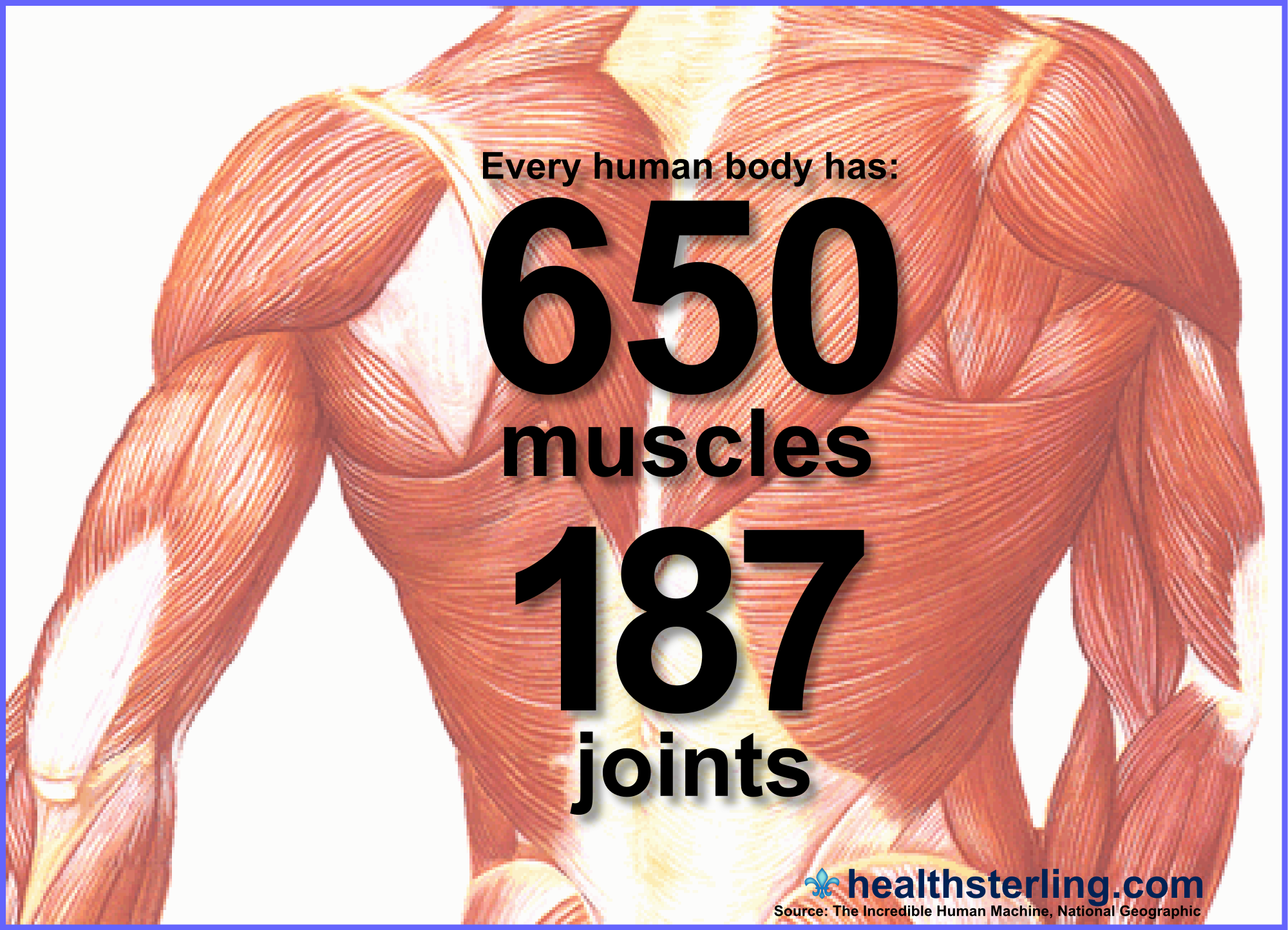 your body is amazing. over 650 skeletal muscles working together, Muscles