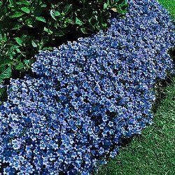 Pin On Gardening 400 x 300