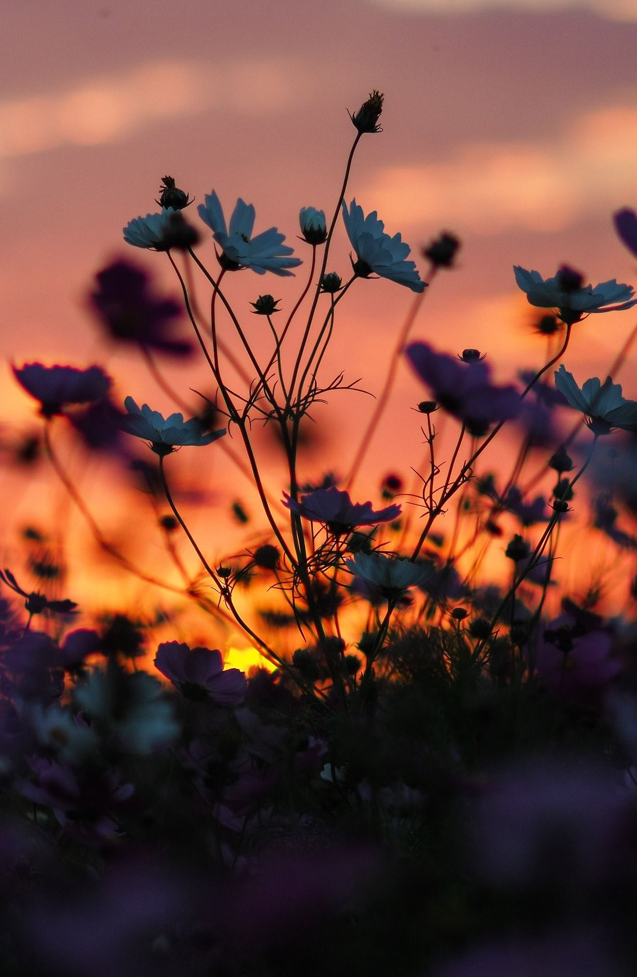 Lens Perspectives — s-m0key:Sunset & flowers Chiayi 嘉義   By -里卡豆...