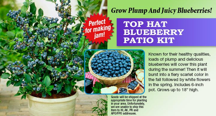 TOP HAT BLUEBERRY PATIO KIT. Have Some Kits For You To At Berries; U0026