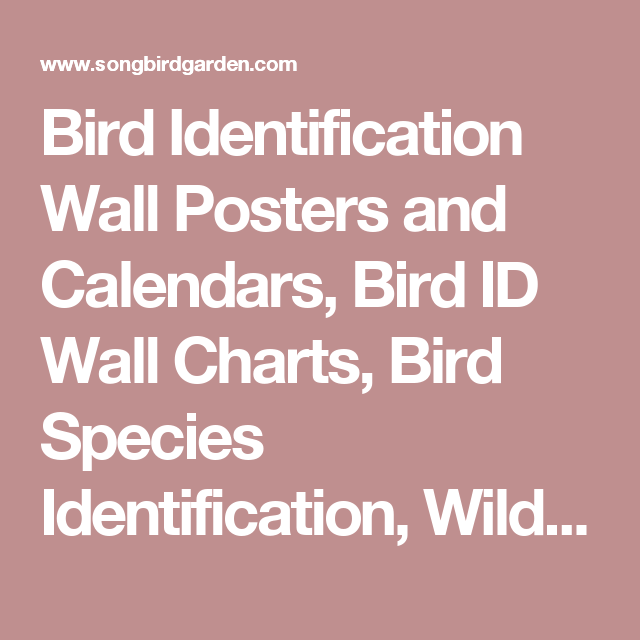 Bird Identification Wall Posters and Calendars, Bird ID Wall Charts, Bird Species Identification, Wild Bird Identification at Songbird Garden