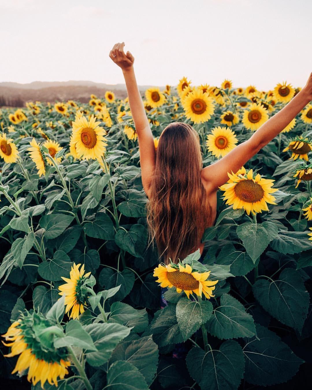 Pinterest Insatiiable  A D V E N T U R E   Sunflower -2628
