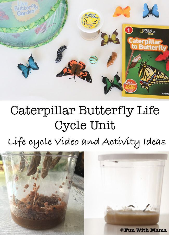 Caterpillar to Butterfly Life Cycle Video and Activities