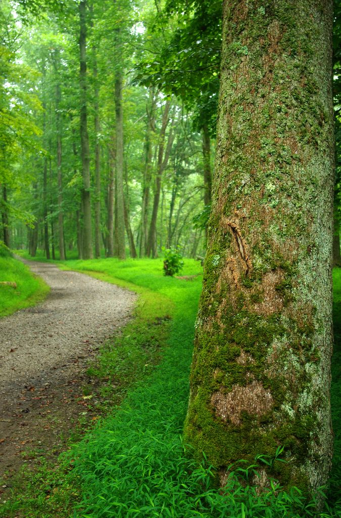 7) North Bend Rail Trail. This 72 mile-long rail trail extends from near Clarksburg, WV, to near Parkersburg, WV.
