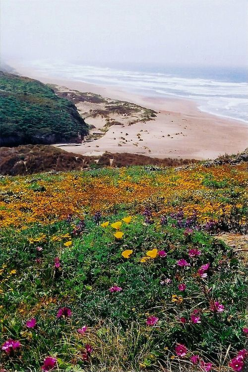 Pt. Reyes National Seashore_California