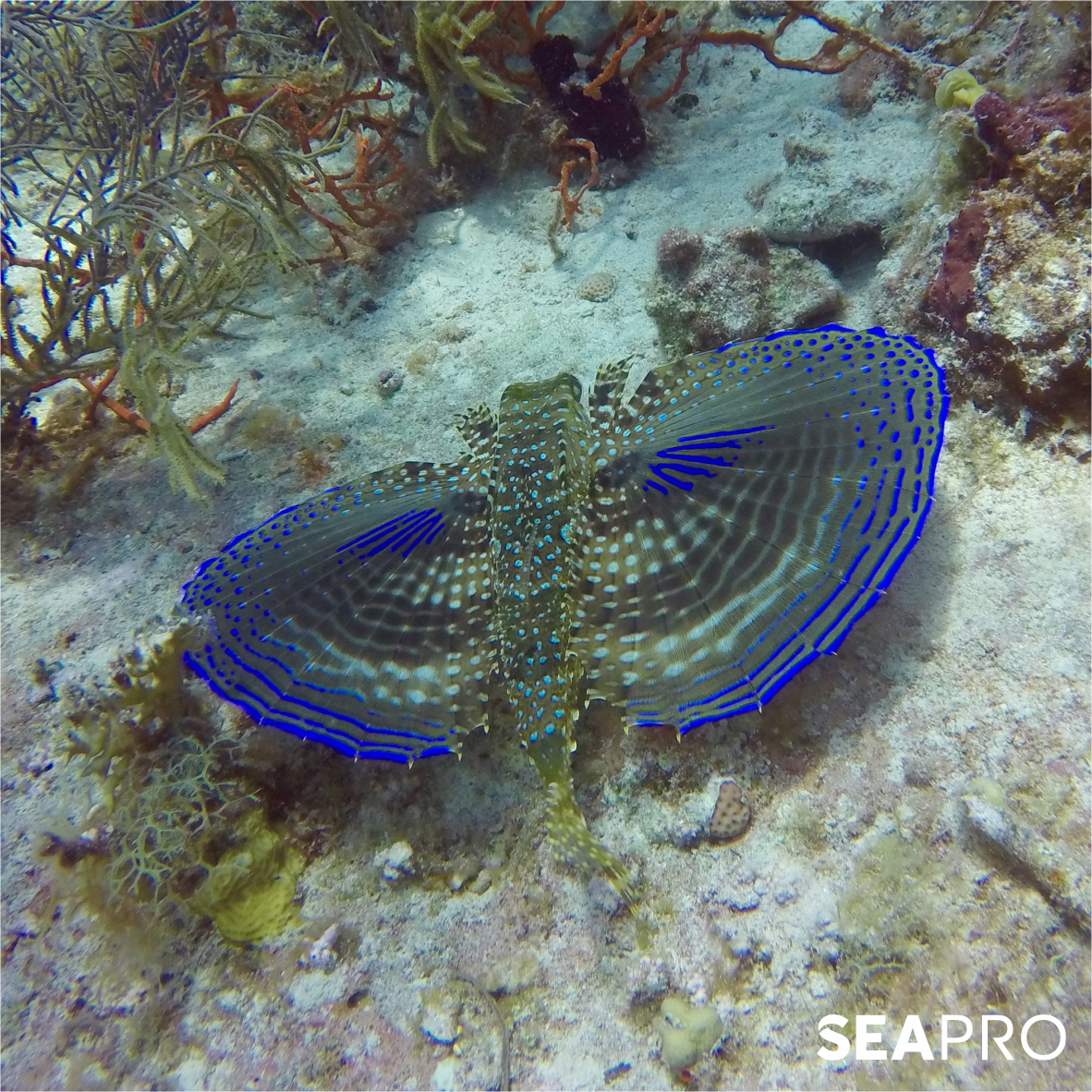 How beautiful is the flying fish! The Marine Life in Punta