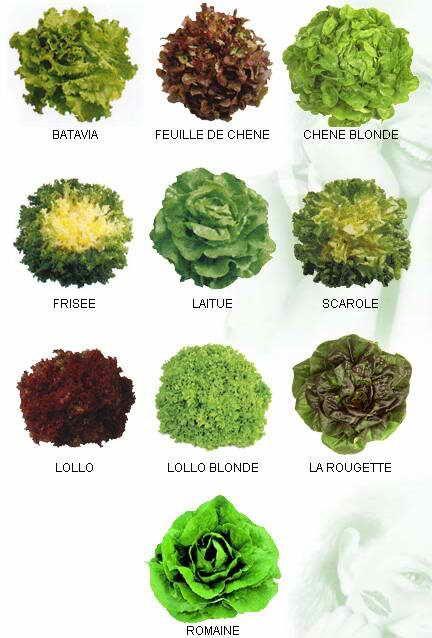 Diff rentes sortes de salades avec leurs noms yummy - Variete de salade d hiver ...