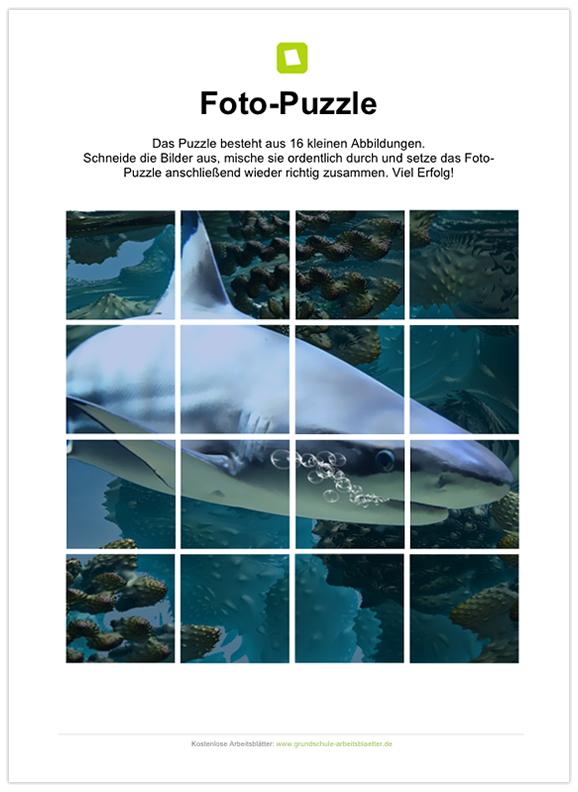 Ein kostenloses Arbeitsblatt zum Thema Haie, auf dem die Schüler 16 ...