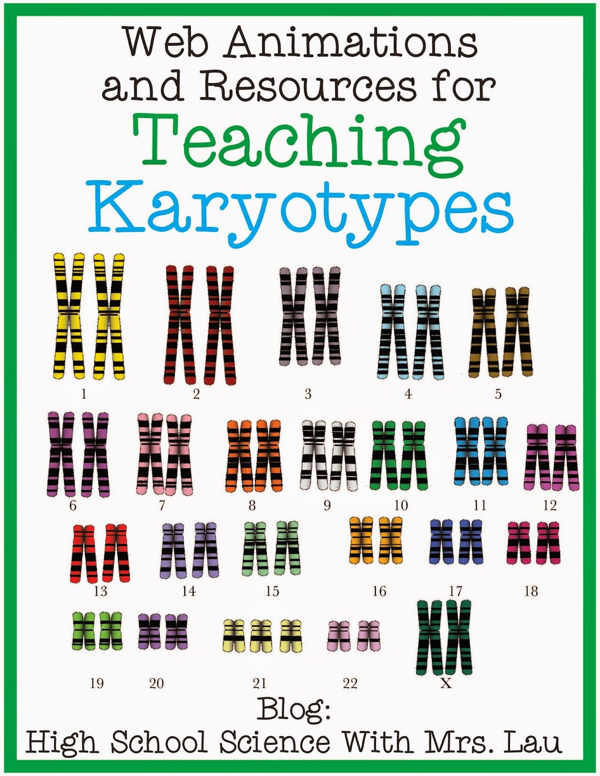 Biology Karyotype Worksheet Answers Karyotype A - worksheet