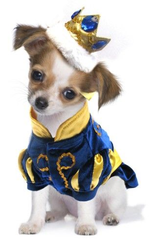 Prince Puppy Charming  sc 1 st  Pinterest & Prince Puppy Charming | Fauna - Fun Frequently Funny Fabulous ...