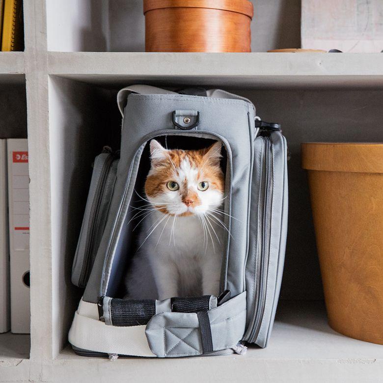 もしも を いつも に 災害時のことを考えた Leonimal のリュック型ペットキャリー Roomie ルーミー ペットキャリー 犬 バッグ 猫