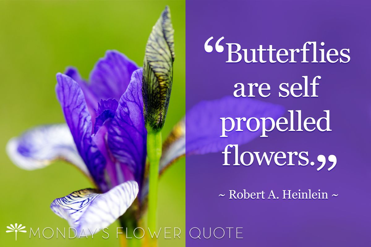 My two cents butterflies are self propelled flowers a quote so explore flower quotes iris and more izmirmasajfo Choice Image