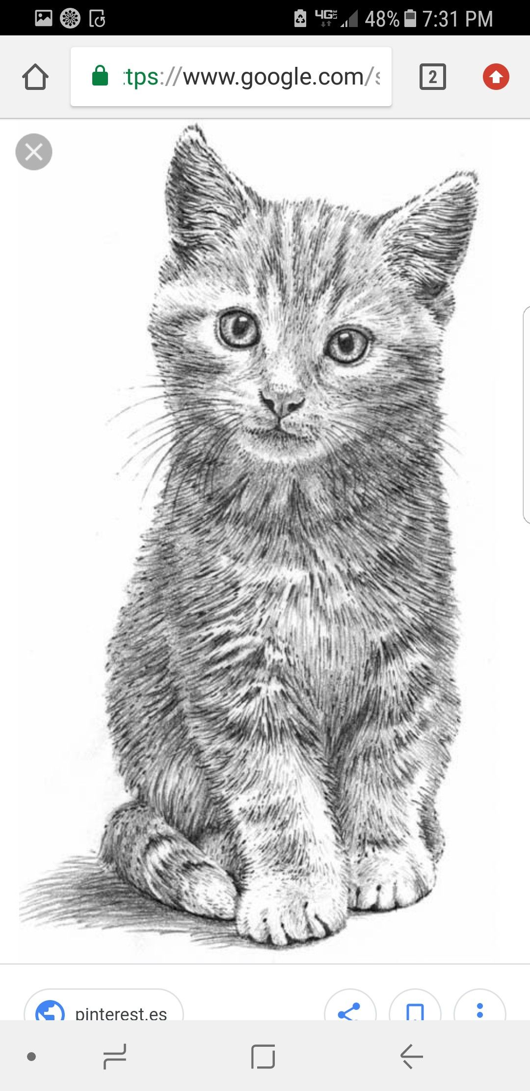 Kitten drawing scratchboard art colored pencil techniques animal drawings pencil drawings