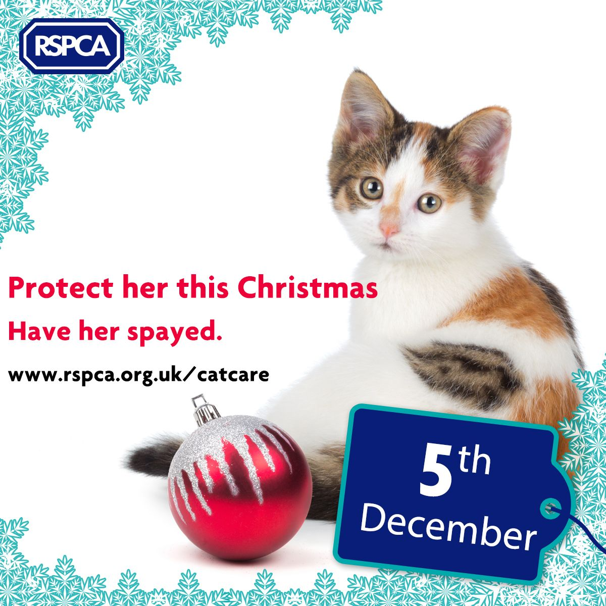 Cats and Cat Neutering, Health and Welfare Cat neutering
