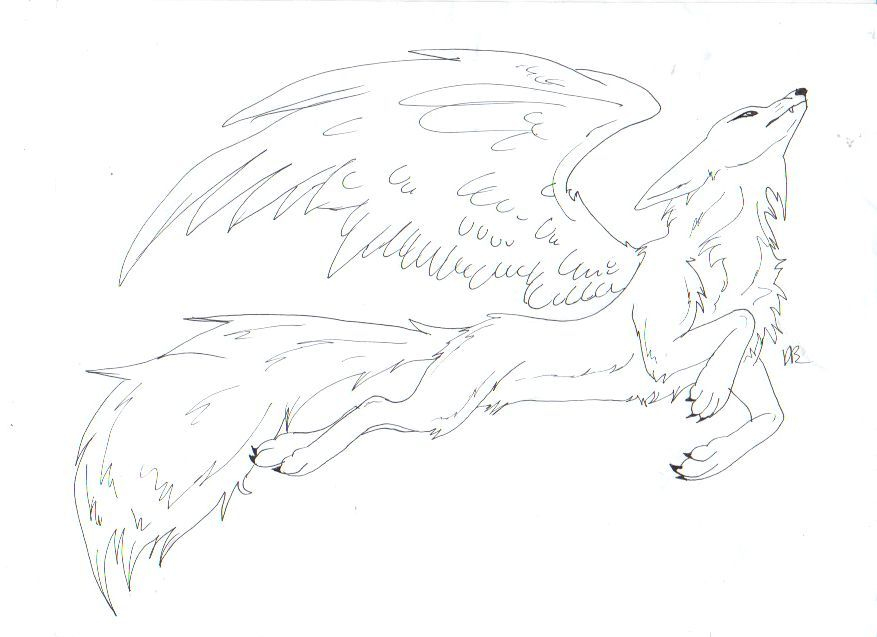 Winged Wolf Base Google Search Wolf Base Wolf Sketches