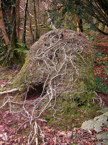 Wood ant nest   Life on earth   Wood ants, Ants, Nest